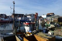 …frischen Fisch aus dem Fischereihafen...